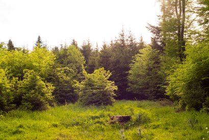 Der Wald - Naturkind