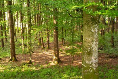 naturkind Wald