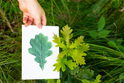 Pflanzennamen, Kräuter Naturkind Waldpädagogik BAyern Salzburg