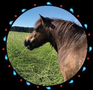 Luna - Pferd der Kinderreitschule Grabenstätt im Chiemgau / Traunstein in Bayern