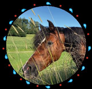 Sternchen - Pony  der Kinderreitschule Grabenstätt im Chiemgau / Traunstein in Bayern