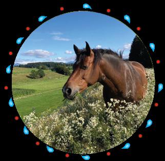 Dyvia - Pferd der Kinderreitschule Grabenstätt im Chiemgau / Traunstein in Bayern