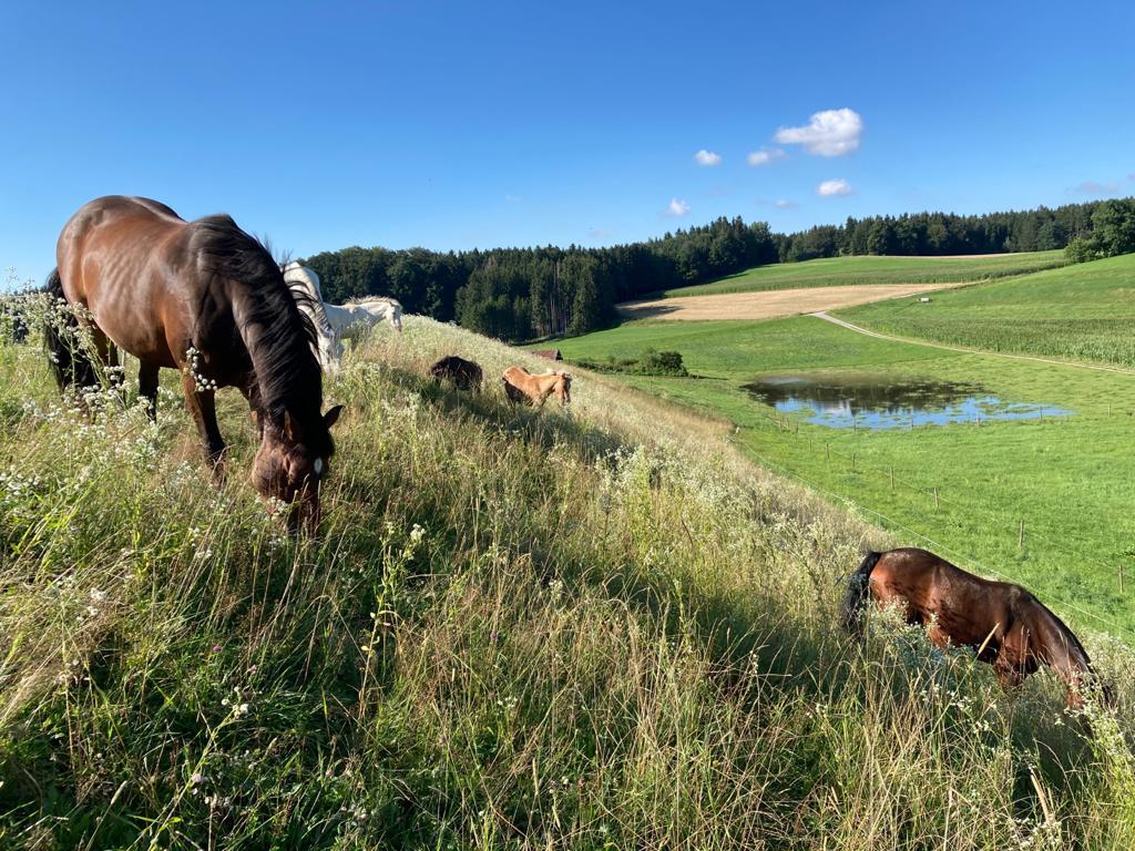 Pferde und Ponys der Kinderreitschule von Sonja Schett in Grabenstätt im Chiemgau bei Traunstein in Bayern