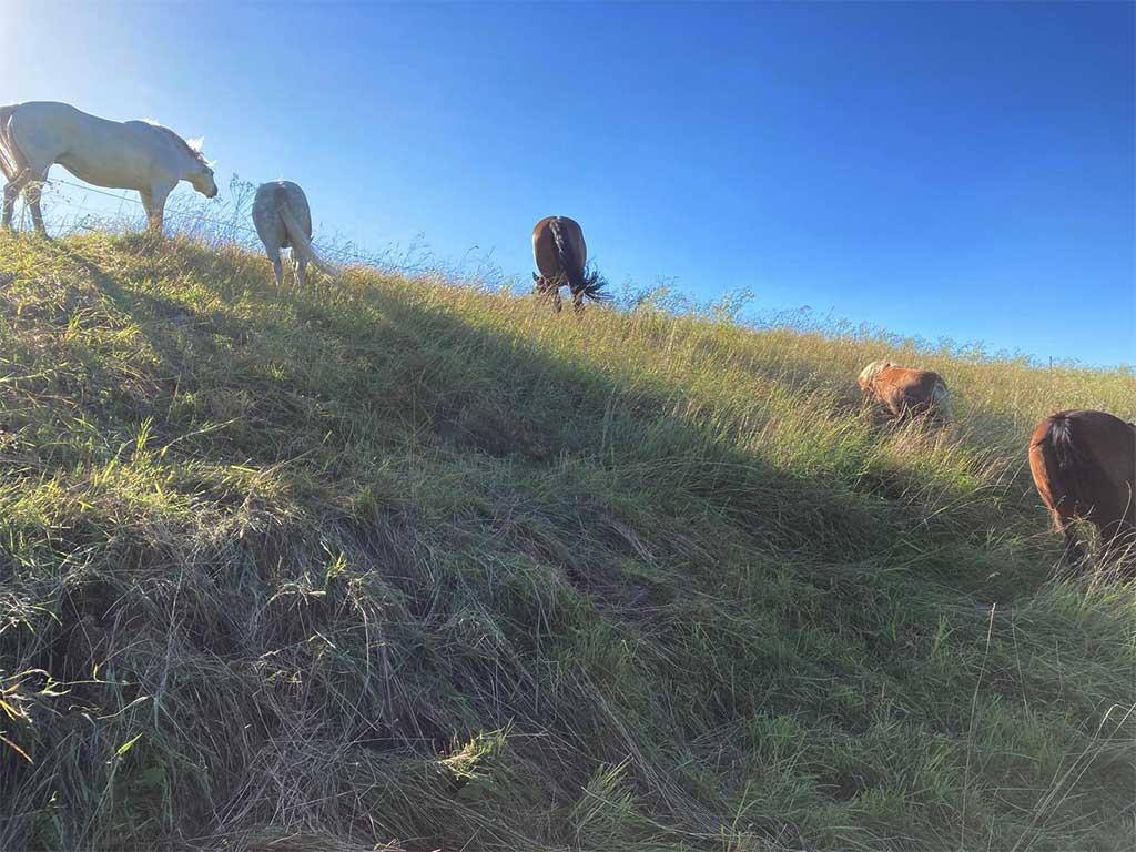 Ponys und Pferde der KinderreitschuleGrabenstätt im Chiemgau - Traunstein in Bayern