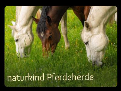 Die Pferde des Reitstall in Grabenstäät - die besondere Reitschule für Kinder in BAyern