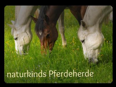 naturkinds Pferdeherde - Pferde und Ponys der Kinderreitschule Grabenstätt